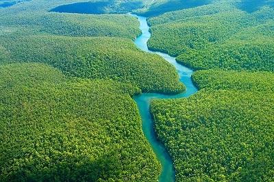 Jenis Ikan Paling Berbahaya di Sungai Amazon