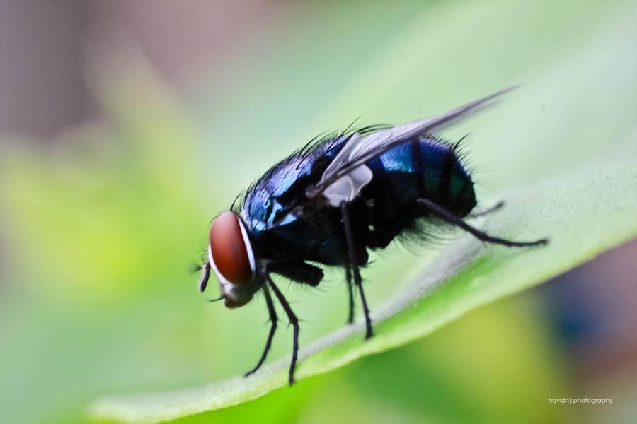 Lakukan Cara Alami Ampuh Ini Untuk Mengusir Lalat
